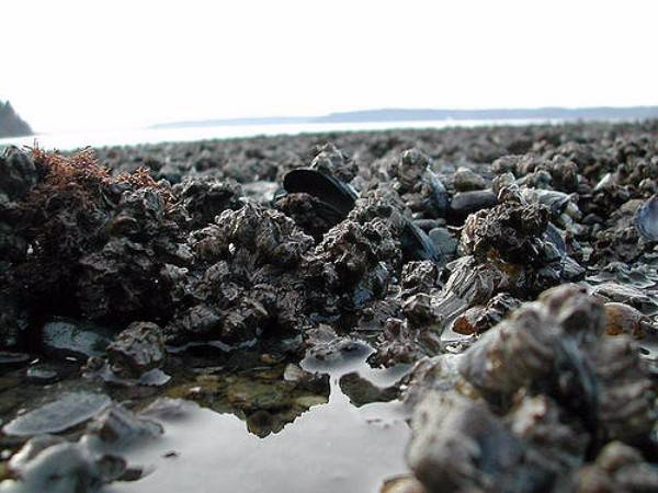 Mysterious Dumas Beach Gujarat
