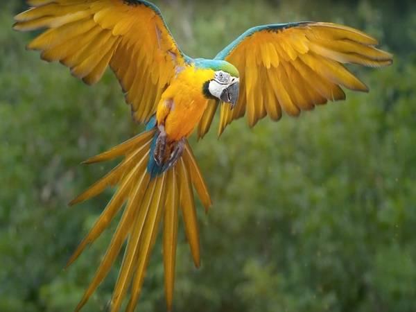 Birds Suicide Spot Mystery