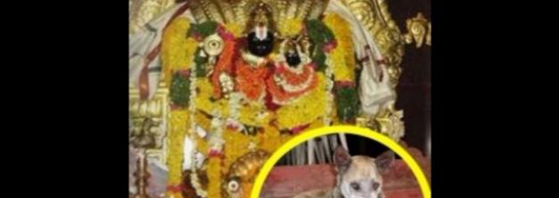 శునకమే కానీ నిత్యం ఆలయంలో దేవున్ని కొలుస్తుంది !