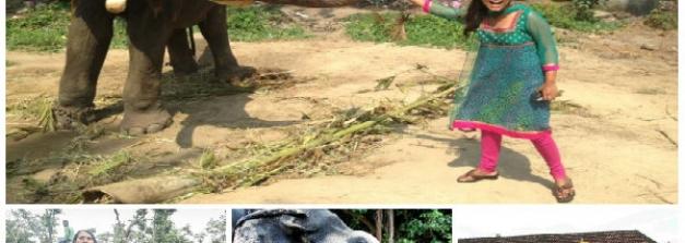 గురువయూరు ధార్మిక క్షేత్రమే కాదు అటవిడుపు కేంద్రం కూడా