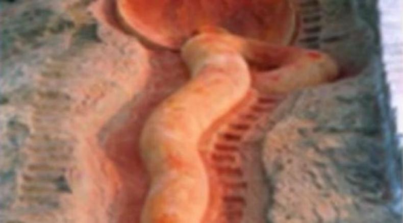 సంవత్సరానికి ఒకసారి మాత్రమే తెరిచే మహిమాన్విత సర్ప దేవాలయం