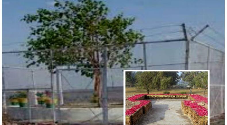 24 గంటలూ గన్ మెన్లతో సెక్యూరిటీ పొందుతున్న అత్యంత పవిత్రమైన వృక్షం